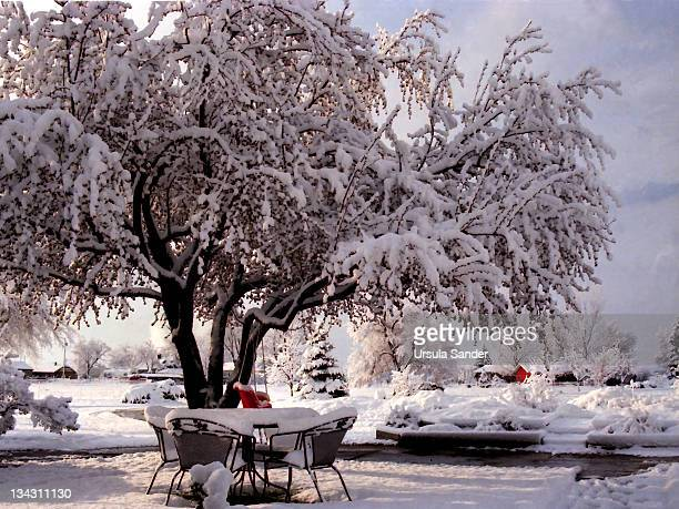 Snow covered seats under old tree