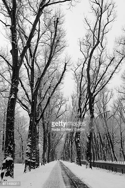 Snow Covered Street Amidst Bare Trees During Winter