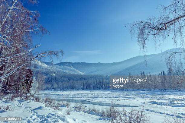 snow covered the fir and birch trees near katun river, altay mountains - sunny stock photos and pictures