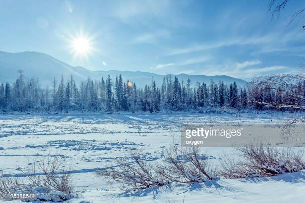 snow covered the fir and birch trees near katun river, altay mountains - シベリア ストックフォトと画像