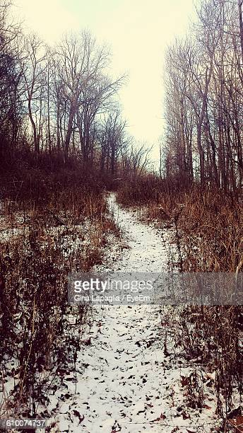 Snow Covered Trail In Forest Against Sky