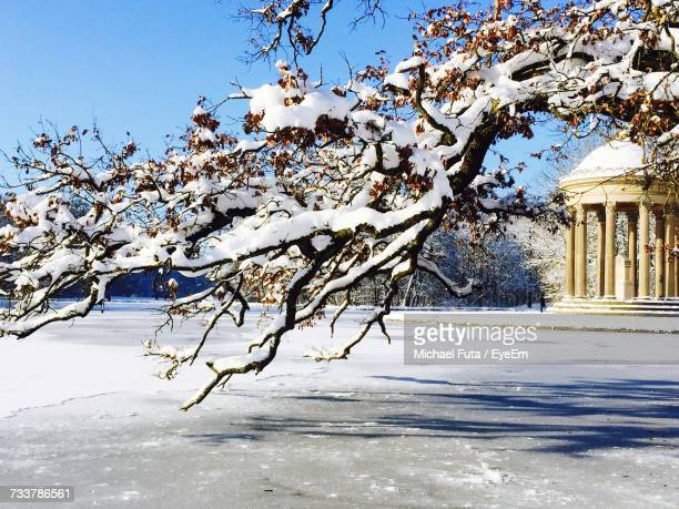 snow covered tree against sky - futa stock photos and pictures