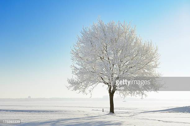 snow covered tree in winter landscape against blue sky - bare tree stock pictures, royalty-free photos & images
