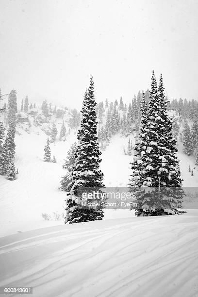 Snow Covered Tree On Field During Winter