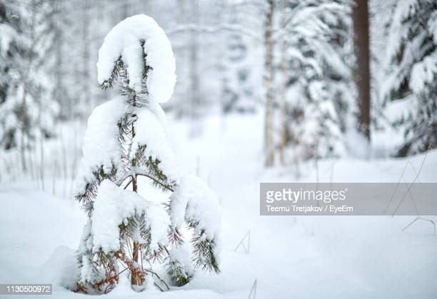 Snow Covered Tree On Land
