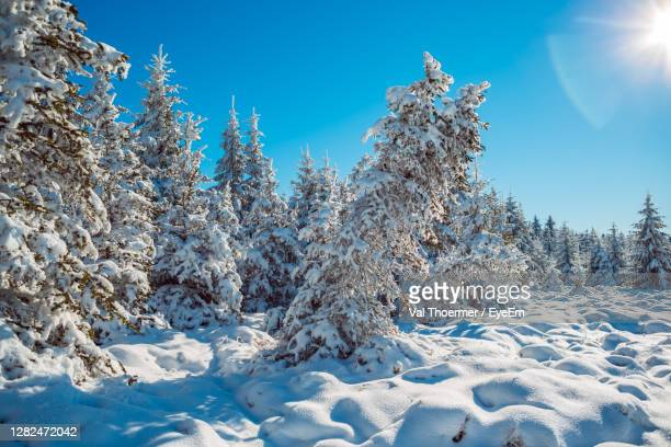 snow covered trees against clear sky - val thoermer stock-fotos und bilder