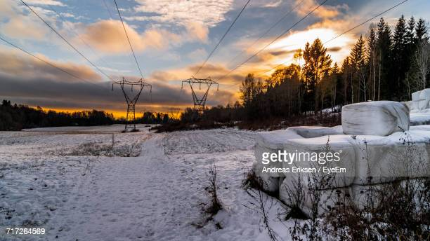 snow covered trees against sky during sunset - eriksen foto e immagini stock