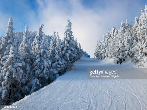 snow covered trees against sky - vermont stock pictures, royalty-free photos & images