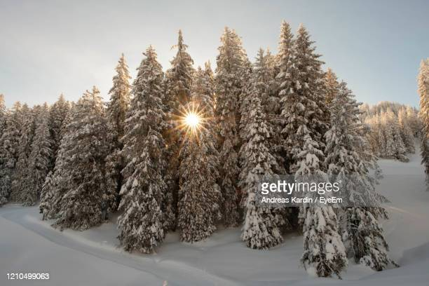 snow covered trees against sky - andreas solar stock pictures, royalty-free photos & images