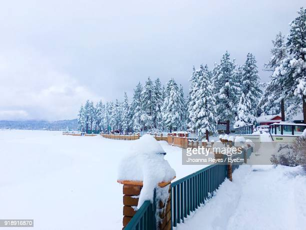 snow covered trees against sky - big bear lake stock pictures, royalty-free photos & images