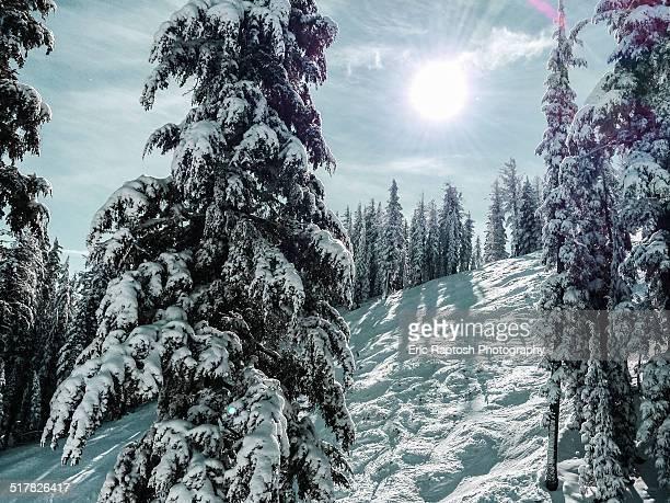 Snow covered trees along moguls at ski resort