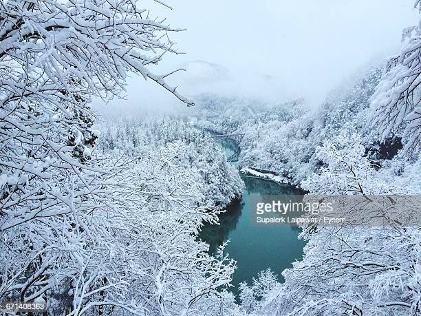 Snow Covered Trees Along The Lake