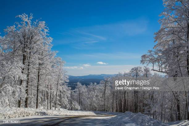 Snow covered trees and dirt road with blue sky and mountains in the distance