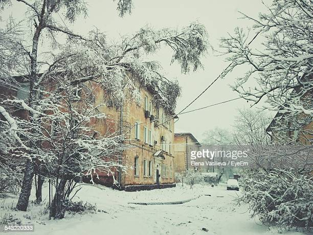 Snow Covered Trees And Houses