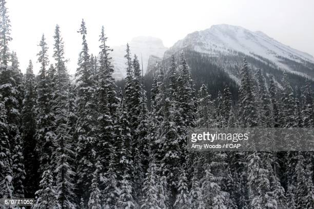 snow covered trees and mountains - amy freeze stock pictures, royalty-free photos & images