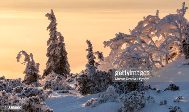 snow covered trees and rocks against sky during sunset - babia góra mountain stock pictures, royalty-free photos & images