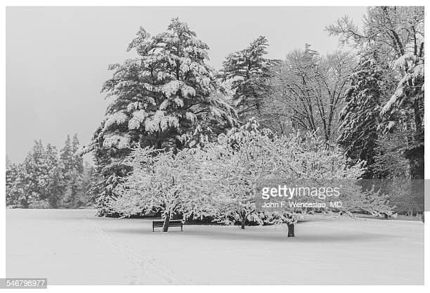 snow covered trees in elizabeth park - black and white instant print stock pictures, royalty-free photos & images