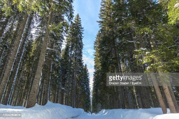 snow covered trees in forest against sky - drazen stock pictures, royalty-free photos & images