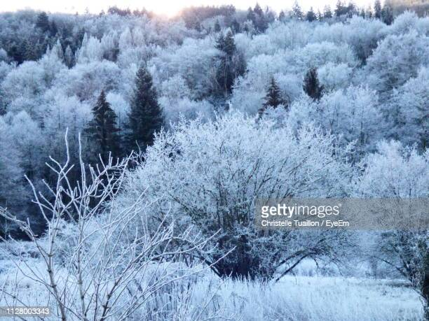 snow covered trees in forest - lorraine smothers stock pictures, royalty-free photos & images