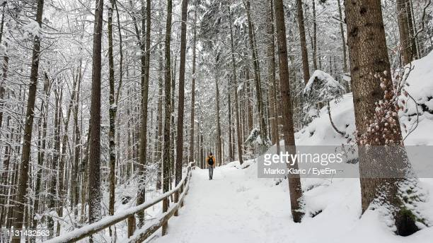 snow covered trees in forest - thuringia stock pictures, royalty-free photos & images