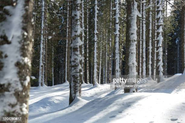 snow covered trees in forest - drazen stock pictures, royalty-free photos & images