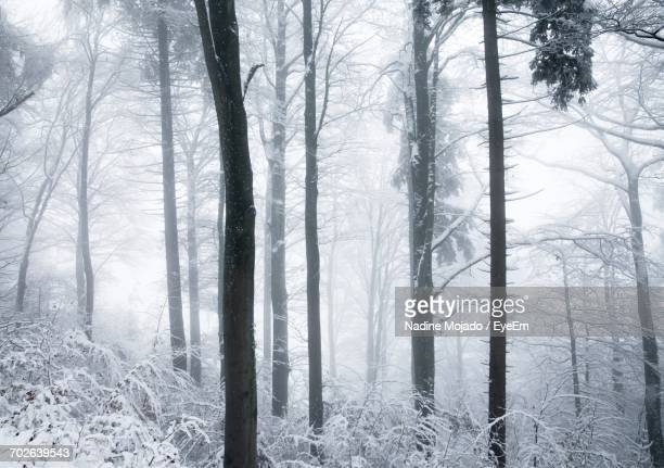 snow covered trees in forest - mojado stock pictures, royalty-free photos & images