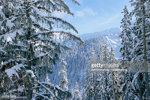 snow covered trees in the winter in the french alps, courchevel, savoie, rhone-alpes, france - courchevel photos et images de collection