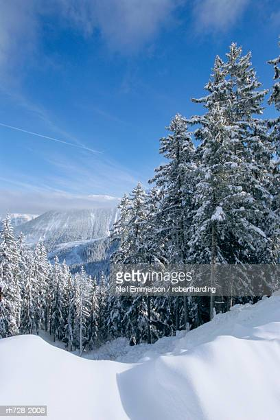 Snow covered trees in winter in the French Alps, Courchevel, Savoie, Rhone-Alpes, France