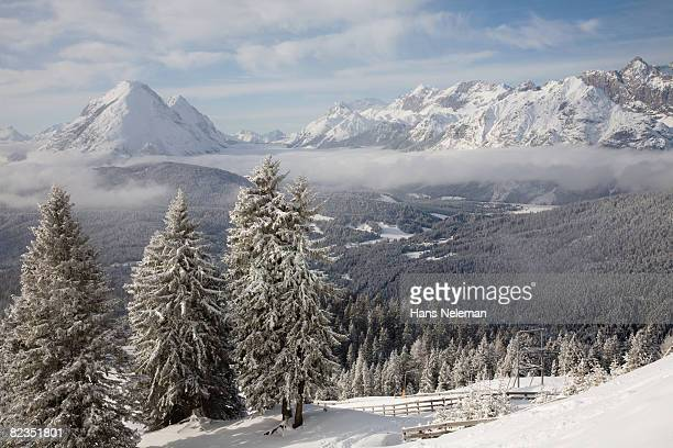 Snow covered trees on a landscape, Seefeld, Tyrol, Austria
