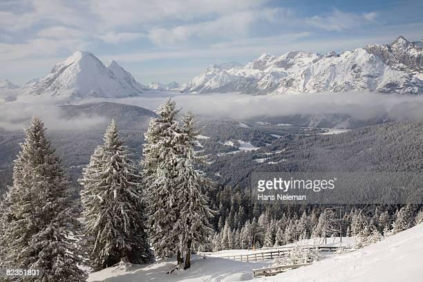 Snow covered trees on a landscape, Seefeld, Tyrol, Austria