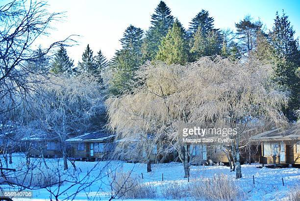 snow covered trees on land - maebashi city stock photos and pictures