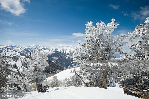 snow covered trees on mountain, wasatch mountains, utah, united states - park city stock pictures, royalty-free photos & images