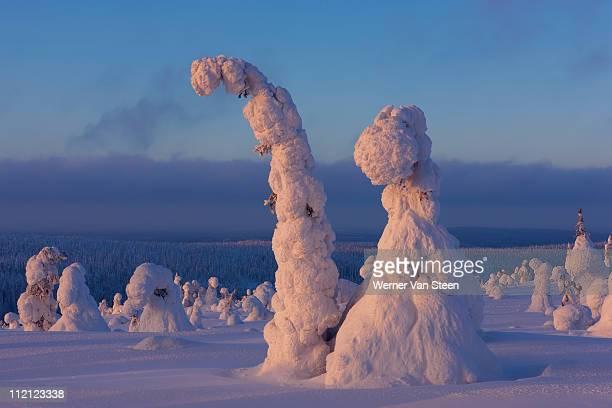 snow covered trees - nature stockfoto's en -beelden