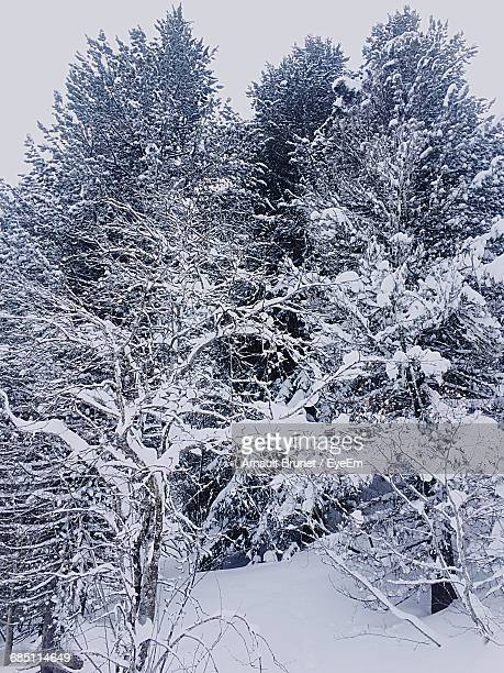 snow covered trees - arnault stock pictures, royalty-free photos & images