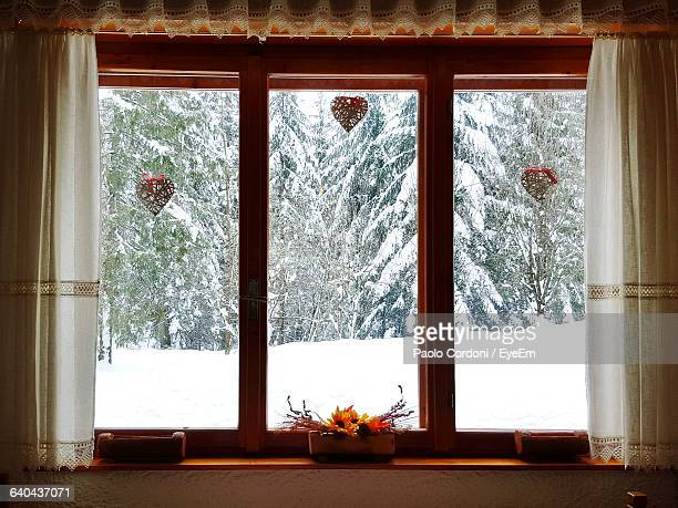 Snow Covered Trees Seen From Window