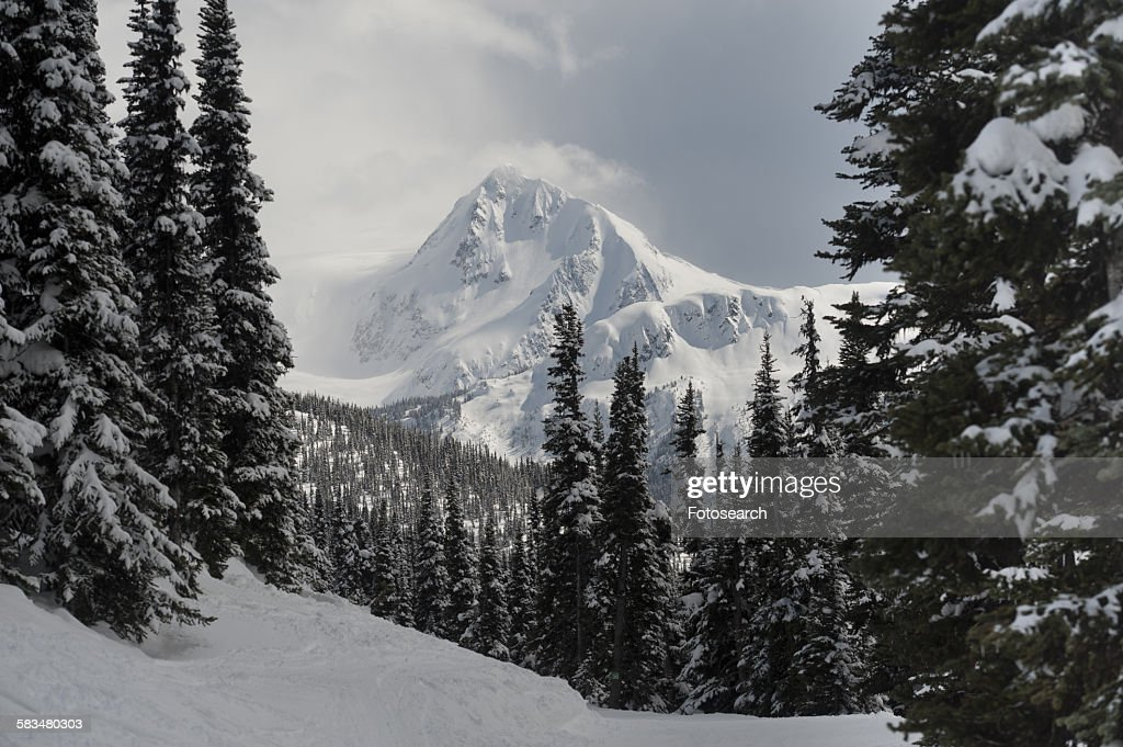 Snow covered trees with mountains : Stock Photo