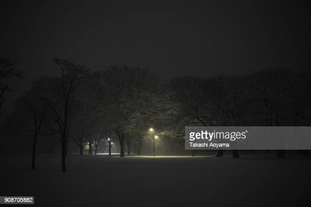 Snow covered tress are seen at the Yoyogi Park on January 22 2018 in Tokyo Japan The Japan Meteorological Agency has issued the heavy snow warning in...