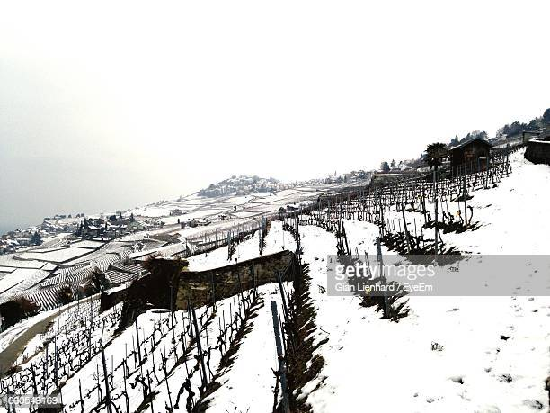 snow covered vineyard against clear sky - lienhard stock pictures, royalty-free photos & images