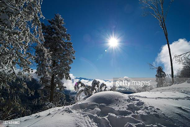 Snow Covered Winter Landscape with Sun