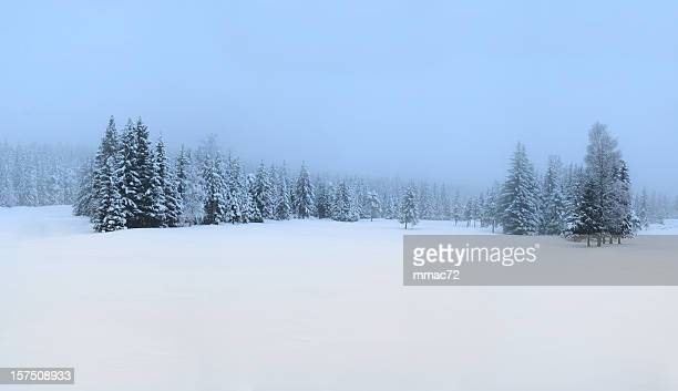snow covered winter panorama - spruce tree stock pictures, royalty-free photos & images