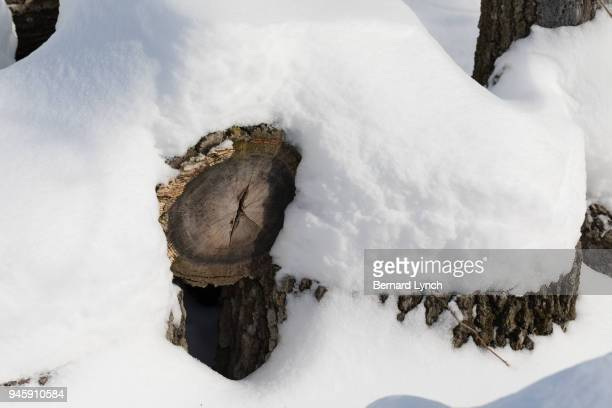 Snow covered woodpile
