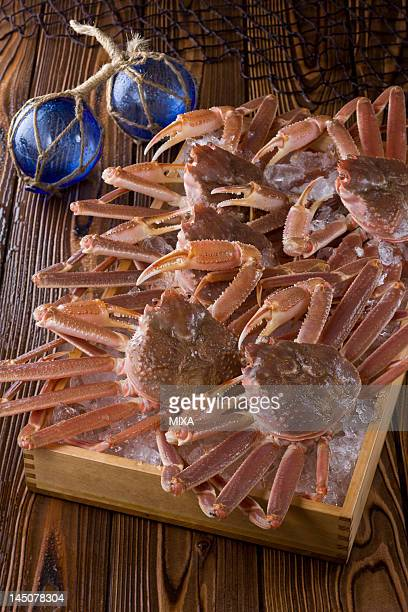 snow crab - chionoecetes opilio stock photos and pictures