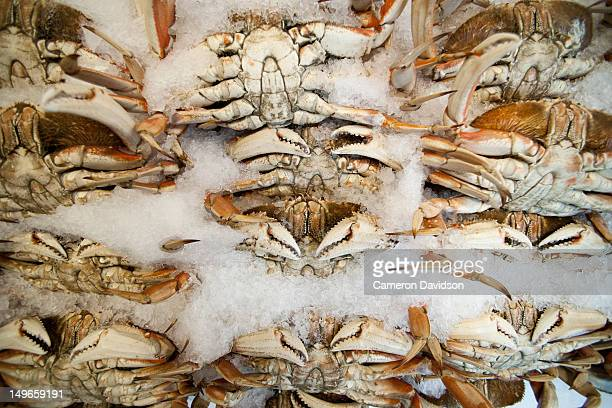 Snow crabs on ice in a Seattle market