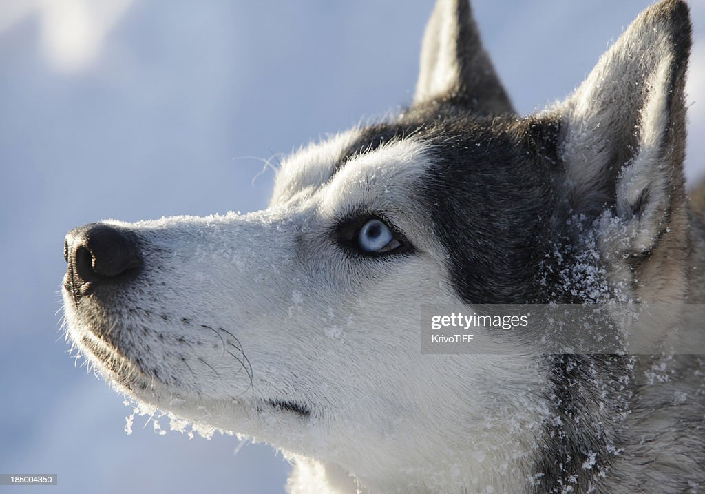 雪の中の犬 : ストックフォト