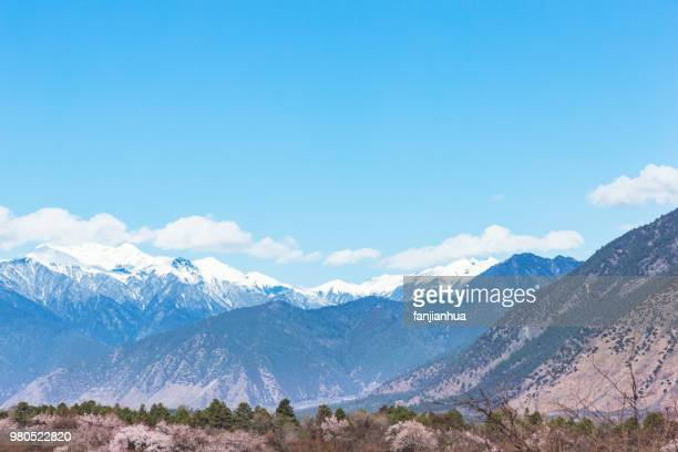 snow domain peach blossom,linzhi county,tibet - peach blossom stock pictures, royalty-free photos & images
