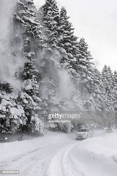 Snow falls from trees to cars on the road at Abant nature Park in Bolu Turkey on January 1 2016