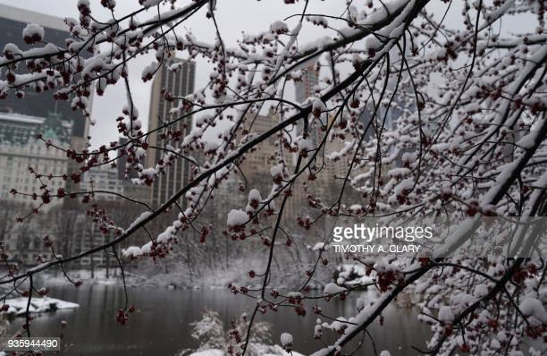 Snow falls on the trees in Central Park on March 21 as the fourth nor'easter in a month hits the tristate area on the first full day of spring Winter...