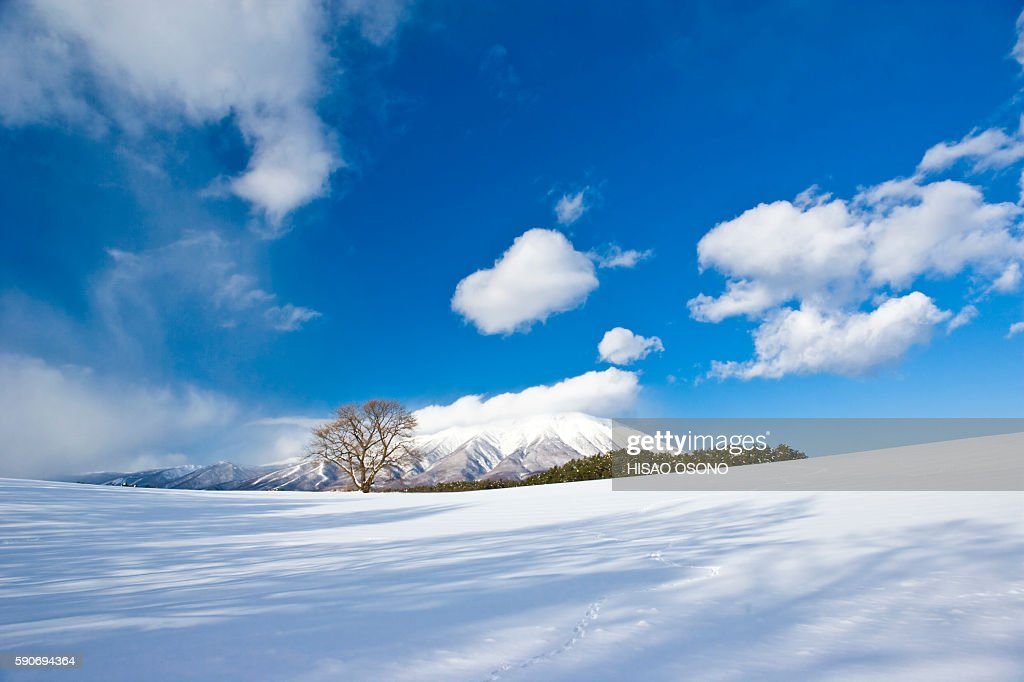 Snow field and mountain, Iwate Prefecture, Honshu, Japan : Stock Photo