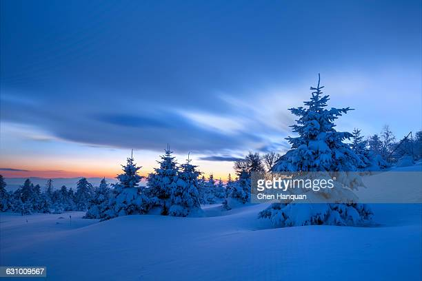 snow field - christmas scenes stock photos and pictures