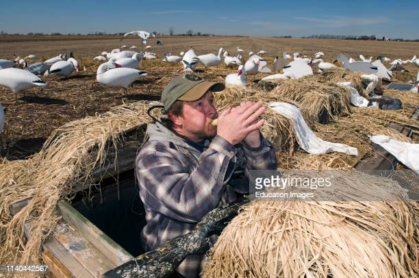 Snow Goose hunter making bird calls Nebraska USA